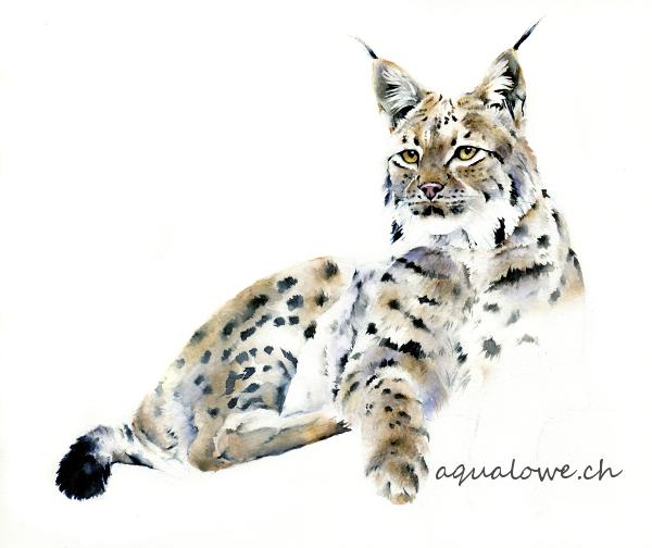 Lynx entier en cours net teintespetit