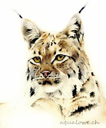 Portrait de Lynx petit