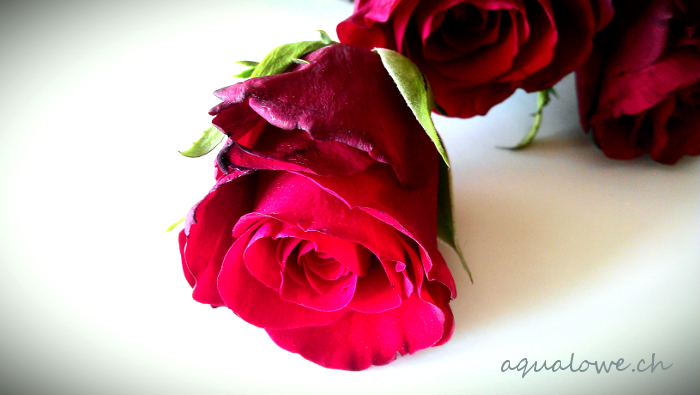 rouge comme une rose