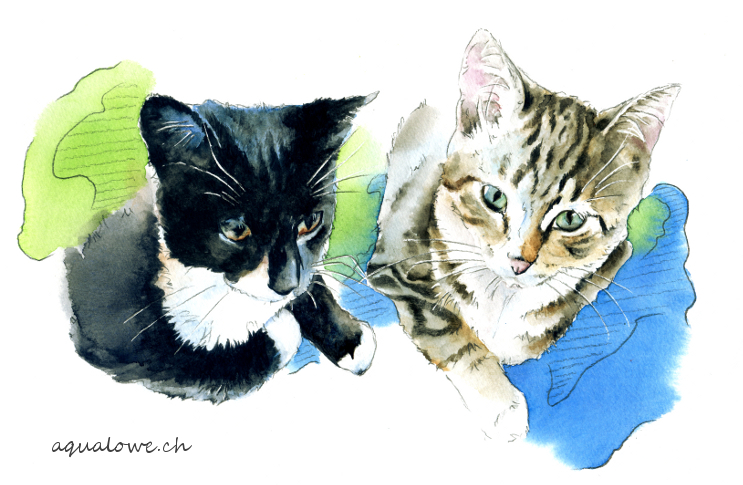 Les chats de Jojo